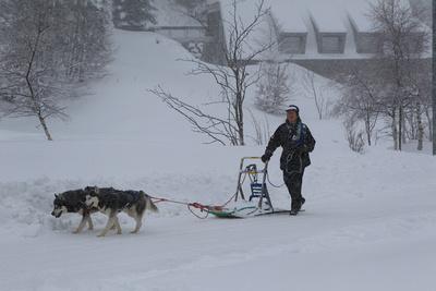 Sled&huskies-WC14_7228